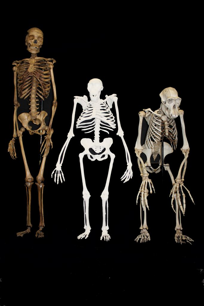 Giant Human Remains  6000yearsorg